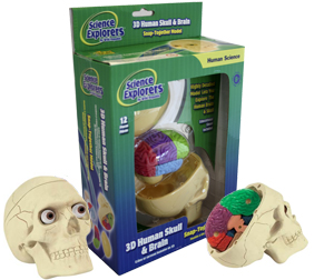 Science Explorers 3D Human Skull & Brain Model