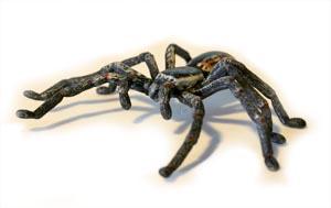 Huntsman Spider Replica 10cm