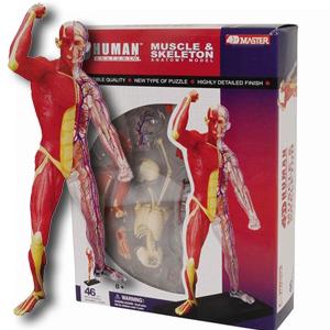 4D Master Muscle & Skeleton Anatomy Model