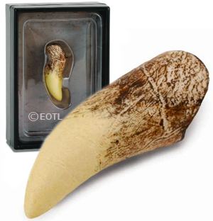 CollectA Replica Triceratops Tooth - 89283