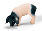 Schleich - Swabian Hall Piglet Eating - 13635