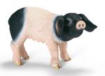 Schleich - Swabian Hall Piglet - 13636