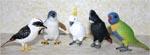 Australian Birds Set of 5 Replicas