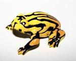 Corroboree Frog Small Replica