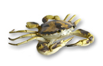 Spotted Crab (Small) - 15cm wide - RETIRED