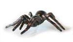 Sydney Funnel-Web Replica Spider 10cm