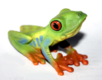 CollectA - Red Eyed Green Frog replica - 88336