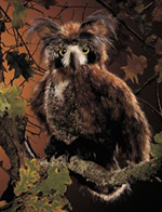 Folkmanis Articulated Horned Owl Puppet 45cm