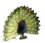 Peacock Fantail by Living World - RETIRED