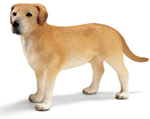 Schliech Labrador Male Dog - 16386