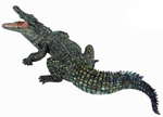 PAPO Nile Crocodile - P50055 NEW!