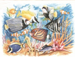 Reeves Senior Watercolour By Numbers - Coral Reef