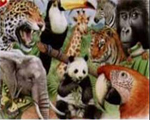 Reeves Senior Watercolour Pencil By Numbers - Jungle Animals