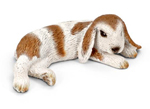 Schleich - Dwarf lop Eared Rabbit - Lying - 13697