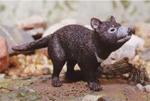 Tasmanian Devil - 13cm