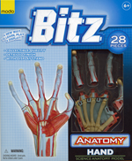 Bitz™ Anatomy Series - Hand Model 28pieces