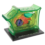 Plant Cell Anatomy Model