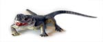 Spiny Dragon Lizard Replica (Ctenophorus) 30cm