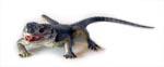 Spiny Dragon Lizard Replica (Ctenophorus) 30cm